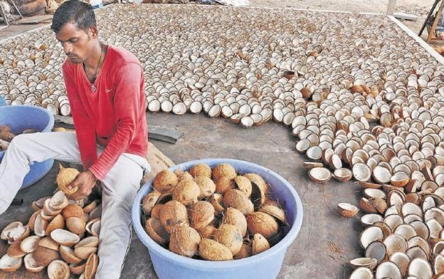 ஐஸ்கிரீம் கப் தயாரிக்க ஏற்ற வகையிலான தேங்காயில் இருந்து கொப்பரையை பிரித்தெடுக்கும் தொழிலாளி.  Courtesy: Hindu