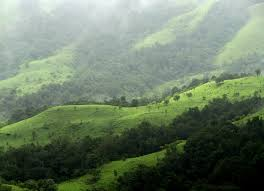 Shola forests Courtesy: WIkipedia