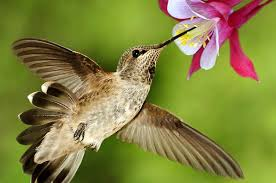 humming2