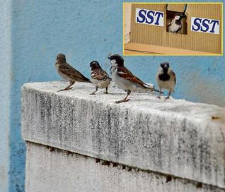 ஹோசூர் அருகே உள்ள கொதகொண்டபள்ளி கிராமத்தில் SST வழங்கிய குருவி அட்டை கூடு Courtesy: Hindu