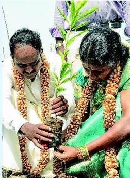 பசுமைத் திருமணம் செய்துகொள்ளும் ரமேஷ் கருப்பையா - செங்கொடி தம்பதி Courtesy: Hindu