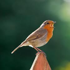 birdsinging2
